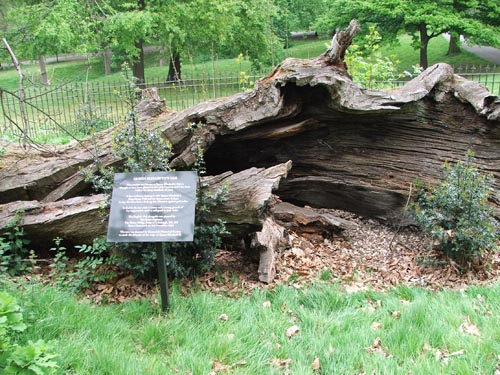여왕의 오크나무( Queen's Oak )